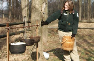 Maple Sugaring
